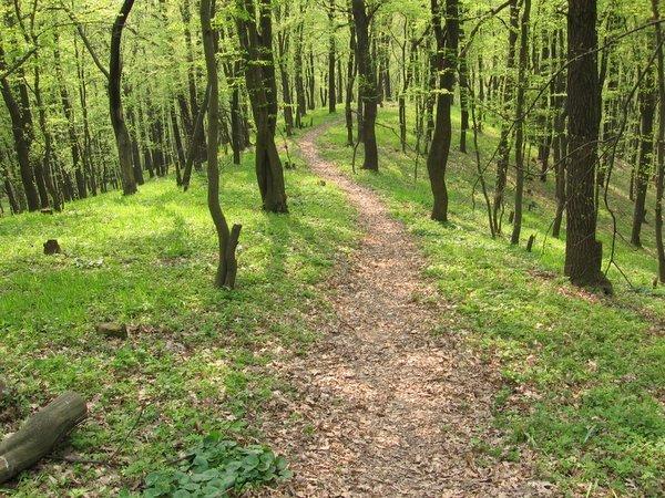 На Полтавщині жінка, збираючи гриби, заблукала у лісі