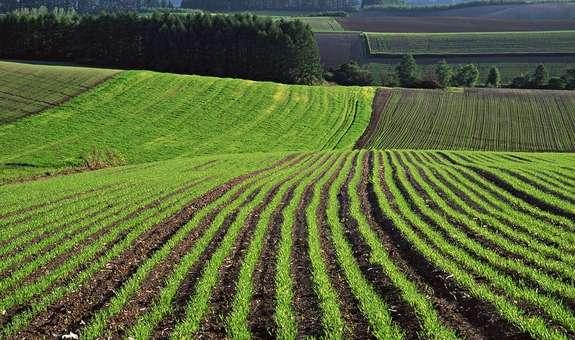 До 2025 року всі власники невитребуваної земельної ділянки (паю) повинні оформити право власності, – ГТУЮ у Полтавській області