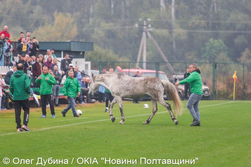 Собаки та кінь ледь не зірвали під Полтавою матч Україна – Італія